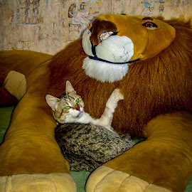 The Cat and the Lion by Sergey Sibirtsev - Animals - Cats Portraits ( cat, toy, pet, sleeping, unusual place )