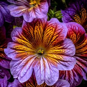 Showy Petals by Robert Coffey - Flowers Single Flower ( gold, botanical, petals, lavender, flower,  )
