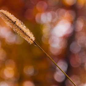 Fall in my backyard-3968.jpg