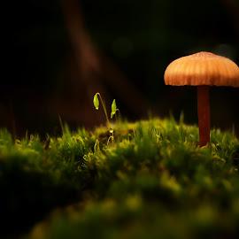 You and I by Miguel Martins - Nature Up Close Mushrooms & Fungi ( mushroom, macro, nature, macro photography, close up, macro shot, mushrooms )