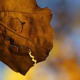 Hide & seek by Michal Fokt - Nature Up Close Leaves & Grasses ( shadow, spider, leaf )