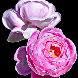 Pretty in Pink by M & D Photography - Digital Art Things