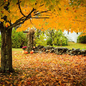 The Fall by Tom Whitney - Public Holidays Halloween ( maine, color, pumpkins, fall, trees, pwcautumn,  )