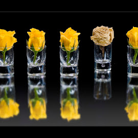 Eddy Maerten by Eddy Maerten - Artistic Objects Other Objects ( five, roses, yellow flower )