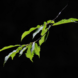Leaves in the forest - Campos do Jordao SP by Marcello Toldi - Nature Up Close Leaves & Grasses