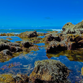 Just Me and The Beautiful Ocean by Glen John Terry  - Landscapes Waterscapes ( glenjohnterry, seaweed, ocean,  )