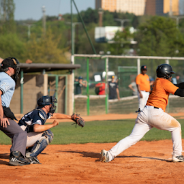 Holland Champion by Vladimir Gergel - Sports & Fitness Baseball