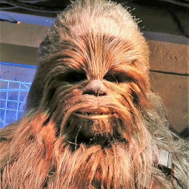 Chewbacca at Hong Kong Disneyland by Dennis Ng - People Musicians & Entertainers