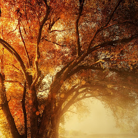 Evening Supper by Sushmita Sadhukhan - Landscapes Forests ( tree, fog, sun rays, deer, fall color )
