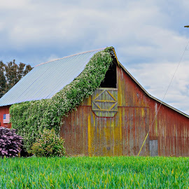 Red Barn in Salem Oregon by Chris Bartell - Buildings & Architecture Other Exteriors ( oregon, old, flag, red, barn, green, salem,  )