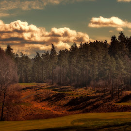 All alone on green by Peter Björklund - Landscapes Forests ( relax, tranquil, relaxing, tranquility )