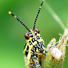 by Abhay Desai - Animals Insects & Spiders