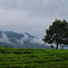 Lonely tree by Deblina Bhunia - Landscapes Prairies, Meadows & Fields ( clouds, hills, tea garden, mountains, tree )