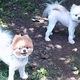 My boy's got haircuts today ready for summer by Joann Saltsman - Animals - Dogs Puppies