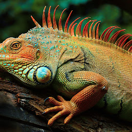 Reptation by Gérard CHATENET - Animals Reptiles