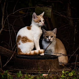 Portrait Sitting by Dennis Roscher - Animals - Cats Portraits ( kitten, cat, woods, cute, peaceful,  )