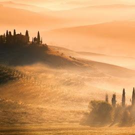 Tuscany by Adnan Bubalo - Landscapes Prairies, Meadows & Fields ( toscana, trees, morning, italy, mist )