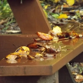 Rainy and wet Fall Leaves by Valerie Paree - Nature Up Close Leaves & Grasses