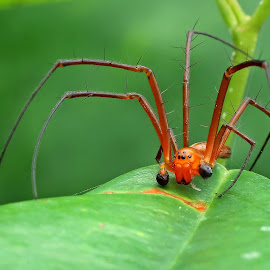 Spider by Lim Andy - Animals Insects & Spiders ( macro, macro photography, nature up close, spider, animal )