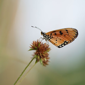 Butterfly by Kristanda Junior - Animals Insects & Spiders