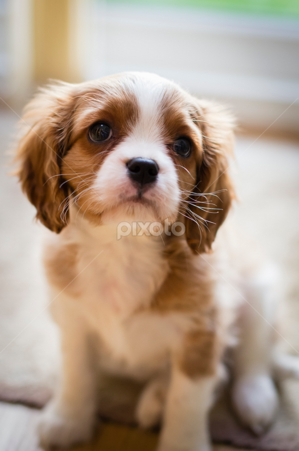 Is It Lunch Time Yet? by Mike Woodford - Animals - Dogs Puppies ( cuddly, adorable, puppy, cute, young, puppydog )