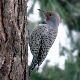 STRANGE BIRD by Cynthia Dodd - Novices Only Wildlife