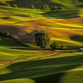 Hills of Palouse by Judi Kubes - Landscapes Prairies, Meadows & Fields ( farm, palouse, home, hills, green, trees, fields,  )