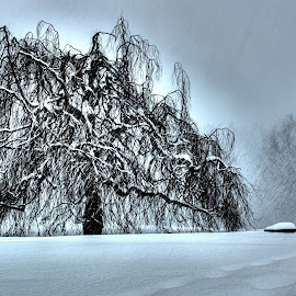 Red Willow Tree by John Valine - Landscapes Weather ( red williow tree, winter, nature, tree, desolate, snow, snow storm, blizzard, willow tree,  )