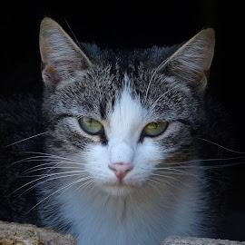 Observing by Laura Payne - Animals - Cats Kittens ( look, car, cat, kitten, watch, stare, white, little, emerge, cute, sweet, observe, female, dark, observing, grey, feline, tabby, black, wall, moggie, animal, hole )