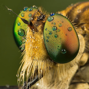Handsome of Me.... by Vincent Sinaga - Animals Insects & Spiders