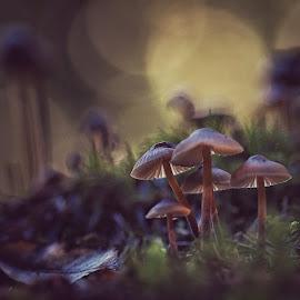 by Guy Krier - Nature Up Close Mushrooms & Fungi