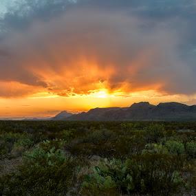 Big Bend Sunset by Jim O'Neill - Landscapes Sunsets & Sunrises ( desert sunset, sunset, texas, big bend national park, big bend, desert, national parks )