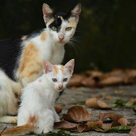 by Justin Mathew - Animals - Cats Kittens