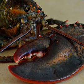 New England Lobster by Steven Liffmann - Food & Drink Meats & Cheeses