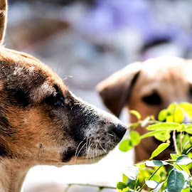 Anxious for mummy. by Debasish Sengupta - Animals - Dogs Puppies ( dogs, photograph, puppy, dog, antique, photo, photography, animal,  )