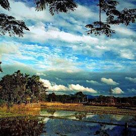 Nature Of  Village  by Ankur Saikia - Nature Up Close Mushrooms & Fungi