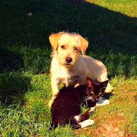 Beautiful frienship by Dobrin Anca - Animals - Cats Playing ( holiday, cat, friendship, dog, sun )