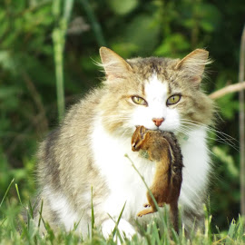 morning Hunt by Ron Young - Animals - Cats Portraits