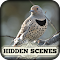 Hidden Scenes - Winter Birding 1.0.32 Apk