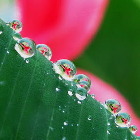 flower drops by Lolit Cabilis - Abstract Water Drops & Splashes ( macro, drops )