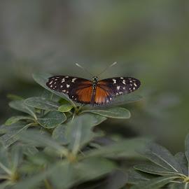 by Péter Dudás - Animals Other ( állatkert, butterfly, zoo, nyár )