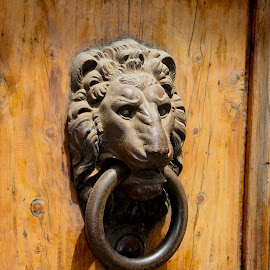 Brass Lion head door knocker by Lisa Klein - Artistic Objects Antiques ( face, detail, old, handle, ornate, wood, door, entrance, iron, open, knock, ancient, style, metal, ornament, head, closeup, classic, animal, lion, ring, vintage, decoration, knocker, traditional, background, antique, design )