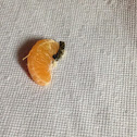 Tangerine ( Fruit) ( With Some Type Of Rot )