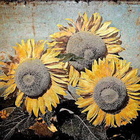 Sunflowers by Roger Armstrong - Digital Art Things ( metal, textures, sunflowers, rust, flowers )