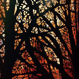 Forest by Eirin Hansen - Abstract Patterns