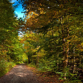 Where my soul roam by Tamas Valentin - Landscapes Forests ( nature, autumn, fall, forest, road, landscape )
