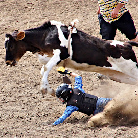 Junior calf rider by Gaylord Mink - Sports & Fitness Rodeo/Bull Riding ( fall, calf, rodeo, rider, dust )