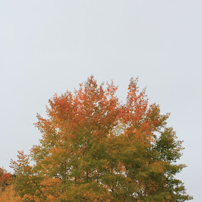 rainbow of fall by Nick Sweeney - Novices Only Wildlife ( aspen trees, colors, trees, leaves )