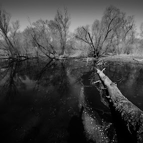 in the forest by Alessandra Antonini - Black & White Landscapes ( water, nature, tree, black and white, bush, trees, branches, river )