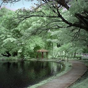 nirwana by Anton Adhitian Nurgraha - Nature Up Close Gardens & Produce
